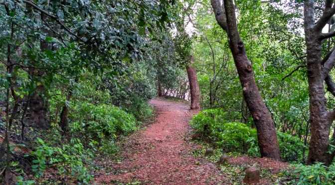 Matheran – Monsoon Hiking in the Jungle